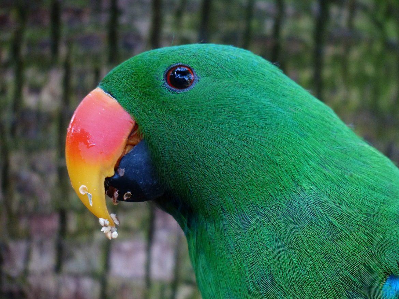 parrot-406664_1280